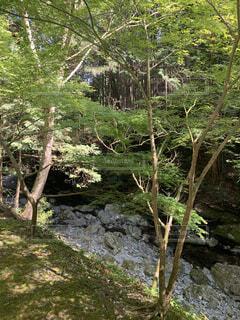自然,屋外,水面,草,樹木,ジャングル