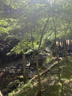 自然,風景,秋,屋外,樹木,ジャングル,草木