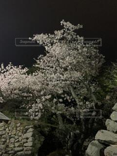 花,屋外,樹木,岩