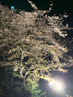 自然,屋外,樹木