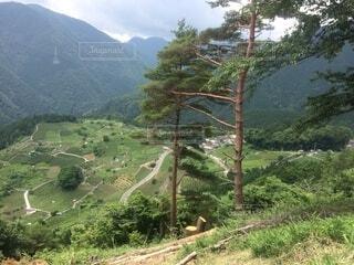 自然,空,森林,屋外,山,草,樹木,ジャングル