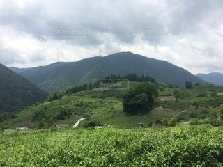 自然,空,屋外,緑,雲,山,草,丘,樹木,旅行,草木,プランテーション