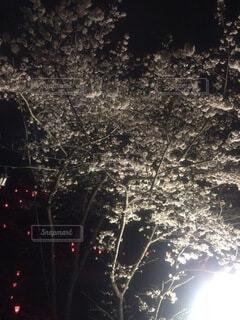 花,屋外,樹木,明るい,景観