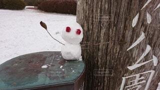 雪,屋外,雪だるま,鹿児島に雪