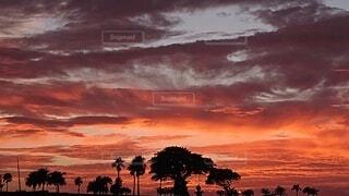 自然,風景,空,屋外,雲,朝焼け,樹木,茜色