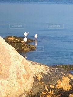 水の体の隣の岩場に立っている鳥の写真・画像素材[4139688]