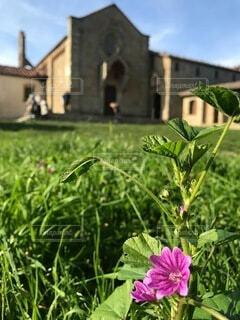 空,花,春,屋外,緑,草,教会,イタリア,青い,フィレンツェ,草木,丘の上,トスカーナ,ガーデン