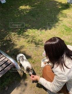 女性,猫,公園,動物,屋外,草,人物,人,癒し,可愛い,野良猫,地面,人懐っこい