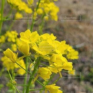 花,屋外,緑,黄色,草木,フローラ