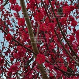 花,秋,赤,葉,樹木,ブロッサム