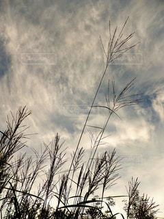 空の写真・画像素材[232767]