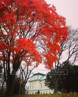 秋の写真・画像素材[252745]