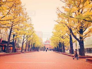 秋の写真・画像素材[253690]