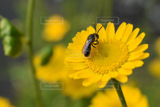 花の写真・画像素材[606775]