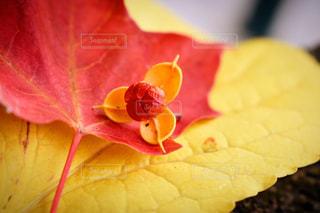 近くの花のアップの写真・画像素材[857991]
