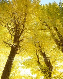 鮮やかな空の写真・画像素材[858569]