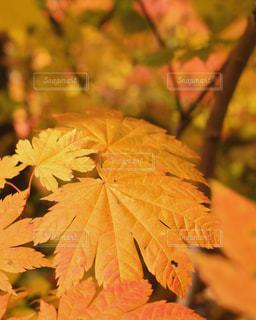 植物の花と木の写真・画像素材[858631]