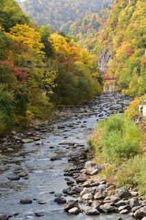 渓流と紅葉の写真・画像素材[858654]