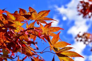 近くの木のアップの写真・画像素材[858762]