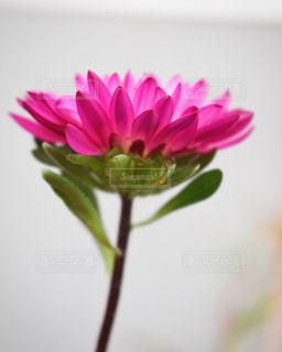花瓶の花でいっぱいの写真・画像素材[858941]
