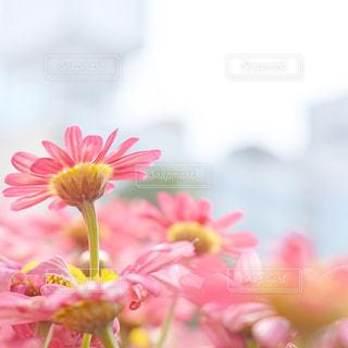 近くの花のアップ - No.858947