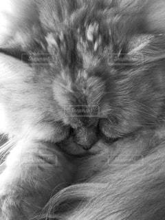 近くに猫のアップの写真・画像素材[880845]