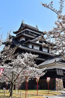 春の松江城の写真・画像素材[1158528]