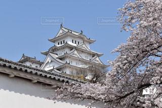 春の姫路城の写真・画像素材[1158630]
