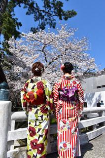 出雲大社の春の写真・画像素材[1158635]