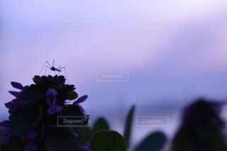 春の夕暮れの写真・画像素材[1225671]