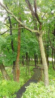 句碑の森の写真・画像素材[1397830]