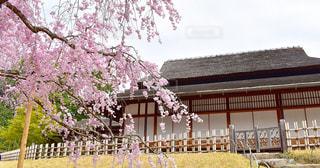 岡山県後楽園の写真・画像素材[1412998]