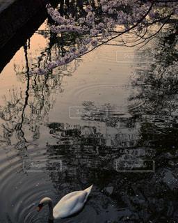 春の暁の写真・画像素材[1841376]