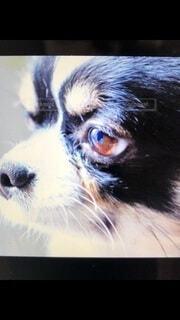 犬,動物,屋内,黒,かっこいい,見つめる