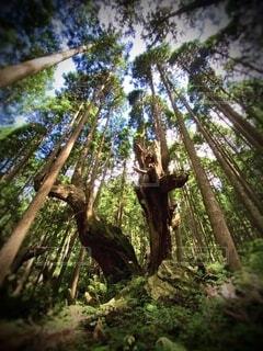 自然,風景,空,森林,屋外,緑,かっこいい,壮大,樹木,新緑,雄大,神秘的,杉,ジャングル,生きる,雰囲気,神秘,感動,神,活力,草木,穏やか,生きてる,神々しい,しぜん,回復,偉大,力,恐れ,威厳,神々,かっけー,自然の力,生きる力,かみ,21世紀の森公園,源,しんぴ,株杉,感動する風景,杉株,感動する,株杉の森,21世紀の森公園 株杉の森
