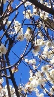 空,花,春,青い空,樹木,支店