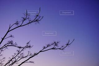 自然,空,夕日,鳥,屋外,湖,太陽,緑,白,雲,青空,青,水,夕焼け,黒,夕暮れ,紫,水面,田舎,山,景色,鉄塔,オレンジ,樹木,電線,電気,野原,土手,青春,快晴,茨城,切り絵,グラデーション,さようなら,日暮れ,草木,明日,小枝,薄紫,今日,みたい,腰掛け,貯水池,電線路,支店,ど田舎,トランスミッションタワー,エモ写,電源供給,シルヘット