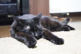猫,動物,屋内,黒,景色,寝転ぶ,子猫,テレビ,スピーカー,黒猫,フローリング,髭,マット,とろける