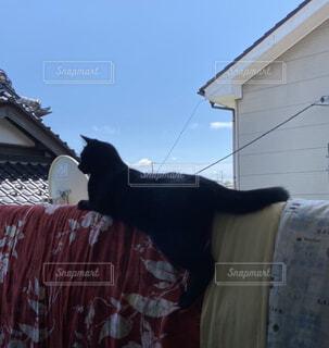 ベランダに干してある布団の上で天日干しされる猫の写真・画像素材[4536012]