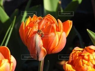 花,屋内,オレンジ,草木