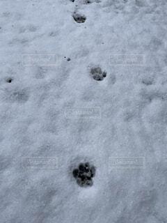 ネコの足跡の写真・画像素材[4171508]