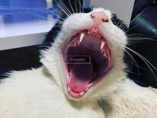 猫,動物,あくび,眠い