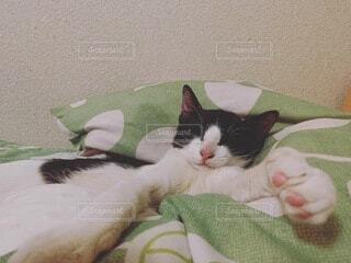 猫,動物,屋内,緑,白,景色,布団