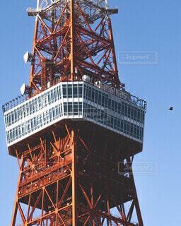 空,建物,鳥,屋外,東京,タワー,日本,展望台,平和,昭和,ランドマーク,建設,象徴,カラス,構造,大規模