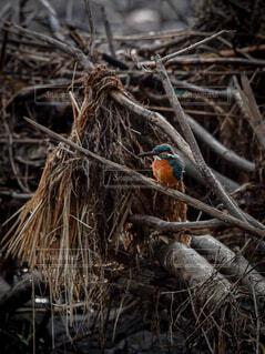 動物,鳥,屋外,オレンジ,樹木