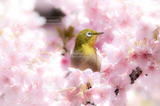 鳥,ピンク,草木