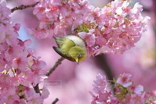 花,動物,鳥,ピンク,草木