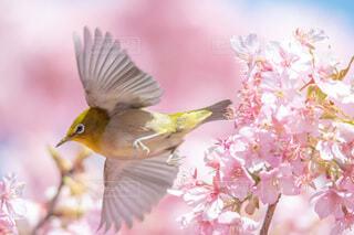 花,動物,鳥,屋外,黄色