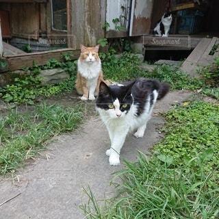 猫,動物,屋外,草,地面