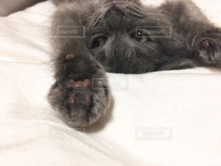 猫,動物,屋内,かわいい,子猫,仔猫,癒し,ベッド